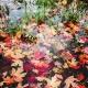 Dreya Layman, Frozen Leaves