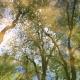 Shinano Katagiri Emanuele, Reflections